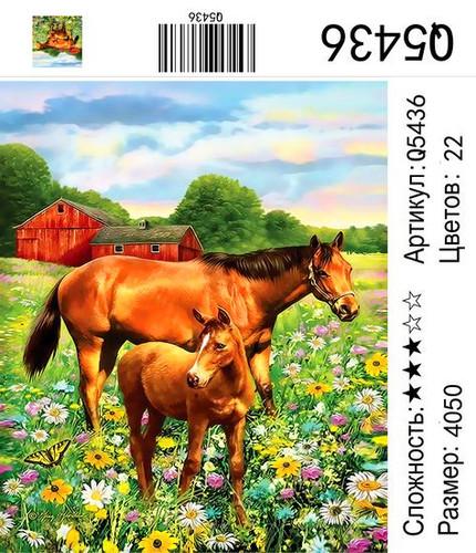 РН Q5436, 40х50 см