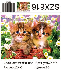 AM23 SZX616, 20х30 см