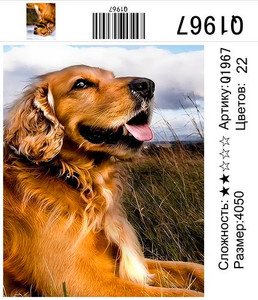 """РН Q1967 """"Рыжий пес"""", 40х50 см"""