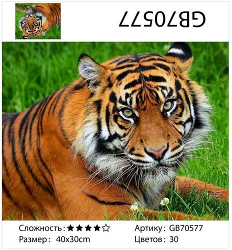 """АМ34 GB70577 """"Тигр лежит на траве"""", 30х40 см"""