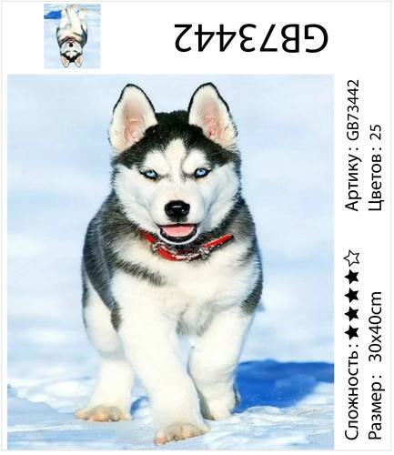 "АМ34 GB73442 ""Щенок хаски на снегу"", 30х40 см"