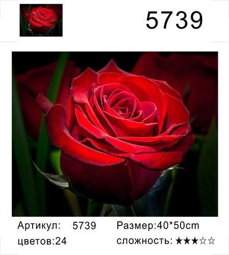 """РД 5739 """"Красная роза на черном фоне"""", 40х50 см"""