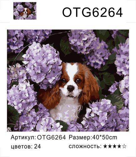 "РН OTG6264 ""Собака в цветах"", 40х50 см"