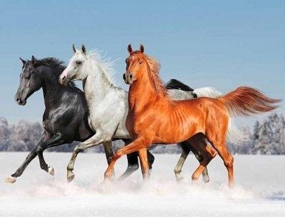"""ВК1910 """"Три лошади скачут по снегу"""" 39х48 см"""