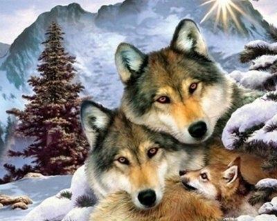 """ВК1946 """"Волчья семья"""" 39х48 см"""