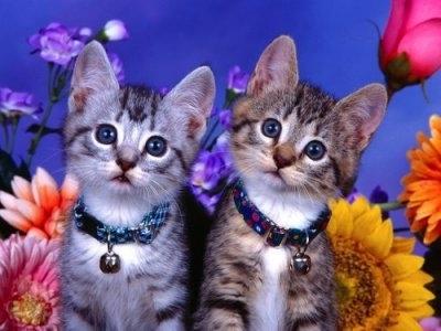 "ВК2108 ""Два котенка на синем фоне"" 39х48 см"