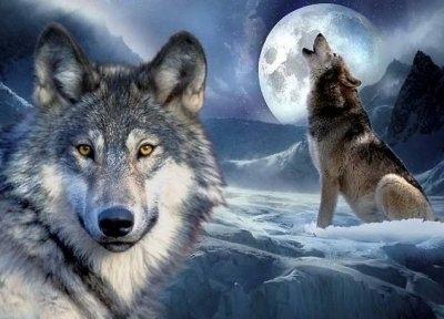 """ВК2126 """"Волки и луна"""" 39х48 см"""