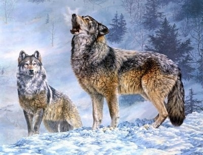 """ВК2246 """"Волк воет, волчица молчит"""" 39х48 см"""