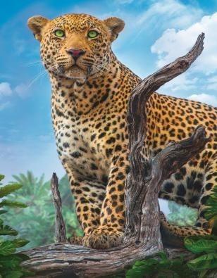 """РН GX30436 """"Леопард"""", 40х50 см"""