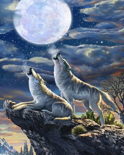 """АМ45 LAG3719 """"Два волка воют на луну"""", 40х50 см"""