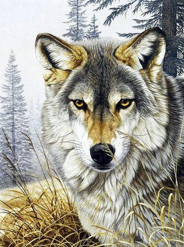 "АМ45 LAG896 ""Волк"", 40х50 см"