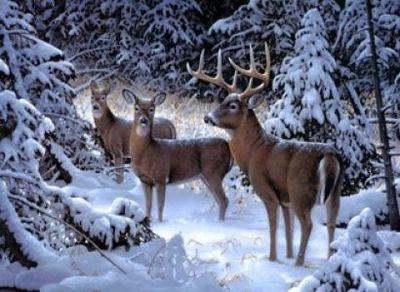 """РН GX6903 """"Три оленя в зимнем лесу"""", 40х50 см"""