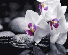 """РН GX21140 """"Белая орхидея на черных камнях"""", 40х50 см"""