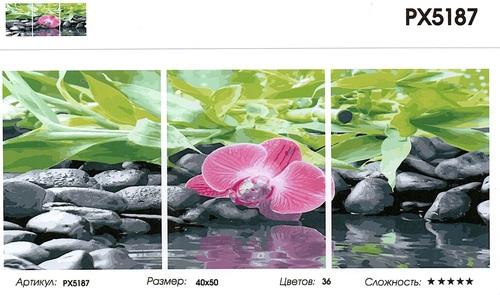 """РТ РХ5187 """"Орхидея на черных камнях"""", 40х50х3"""