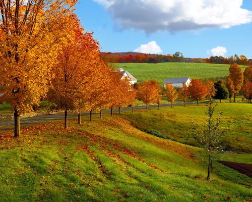 """РН GX24513 """"Осенние деревья на поле"""", 40х50 см"""
