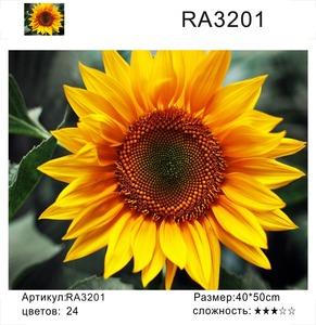 """РН RA3201 """"Подсолнух"""", 40х50 см"""