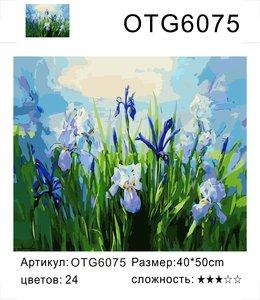 """РН OTG6075 """"Ирисы"""", 40х50 см"""