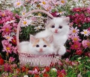 "ВК1459 ""Два котенка в корзинке"" 39х48 см"