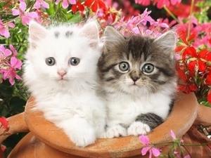 """ВК2255 """"Два котенка в кувшине"""" 39х48 см"""