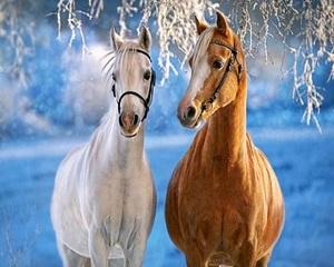"РН GX31608 ""Пара лошадей зимой"", 40х50 см"