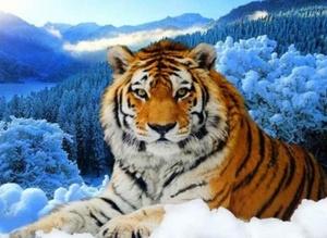 """АЧ JA20983 """"Тигр на снегу"""", 21х25 см"""