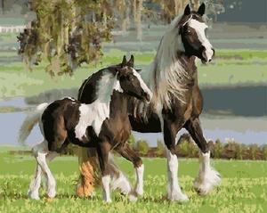 "РН GX5842 ""Белогривые лошади"", 40х50 см"