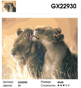 """РН GX22930 """"Львица облизывает льва"""", 40х50 см"""
