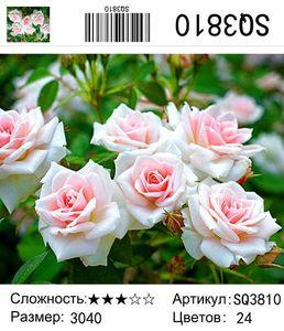 """РЗ SQ3810 """"Бело-розовые розы"""", 30х40 см"""