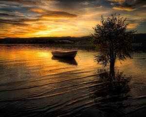"""РН GX24607 """"Лодка около дерева в воде"""", 40х50 см"""