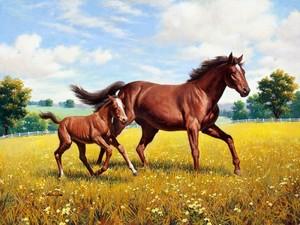 """РН GX24638 """"Лошадь с жеребенком в поле"""", 40х50 см"""