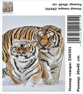 """АМ34 ZX0391 """"Два тигра зимой"""", 30х40 см"""