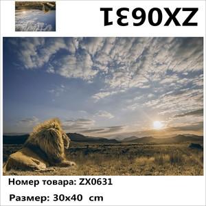 "АМ34 ZX0631 ""Лев смотрит на солнце"", 30х40 см"